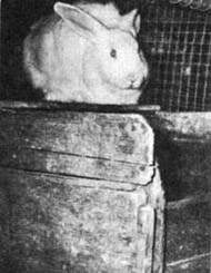 All you need to know About Rabbit Housing