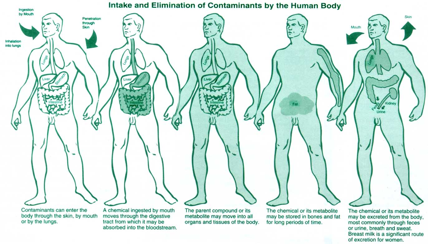 an analysis of the effects of inhalants on the human body