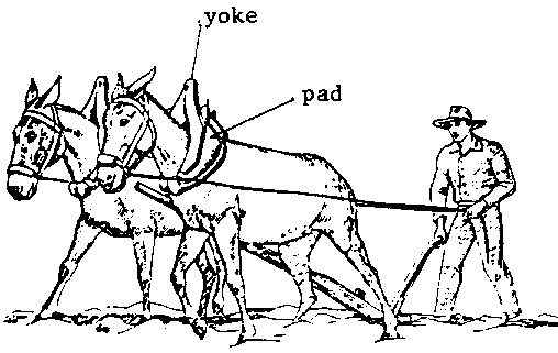 Yokes And Harnesses For Cattle