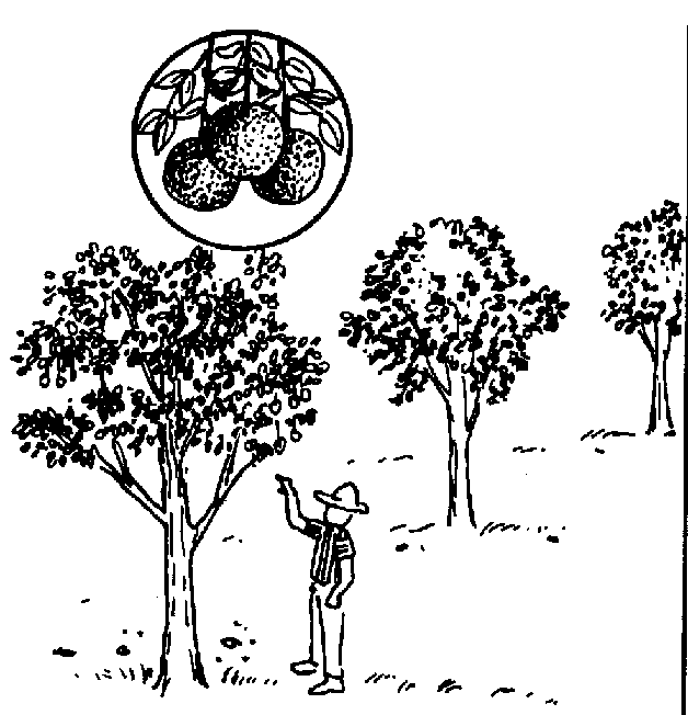 coloring pages prunes - photo#45