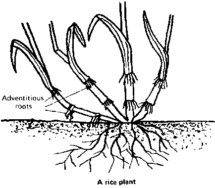 Different Kinds Of Roots