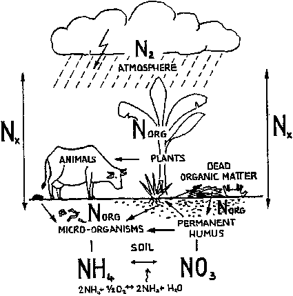 improved biogas unit for developing countries 10 use of slurry Nitrogen Cycle Drawing