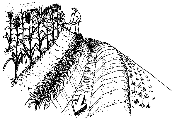 Contour plowing drawing for Define terrace farming