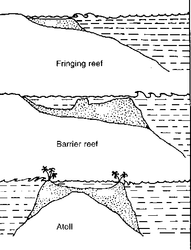 types of reefs diagram