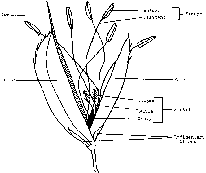 Rice Production Introduction