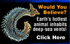 Would You Believe? Learn about the earth's hottest animal.